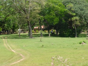 Benign pastureland in the area settled by the New Australians of Paraguay.