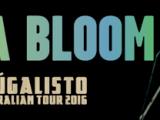 Luka Bloom Tour2016