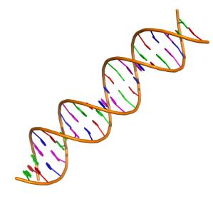 Double stranded DNA fragment